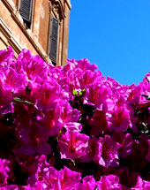 the Spanish Steps in primavera pink.